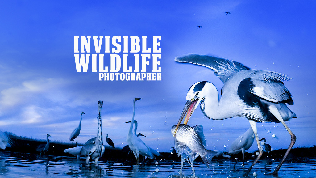 Invisible Wildlife Photographer