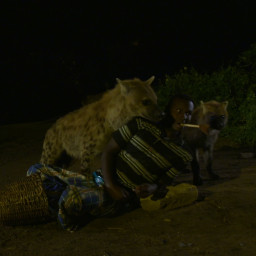The Hyenas Of Harar