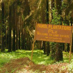 Appetite for Destruction: The Palm Oil Diaries