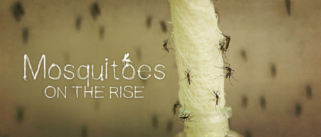 Mosquitoes on the rise