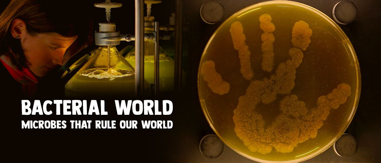 Bacterial World - Microbes That Rule Our World