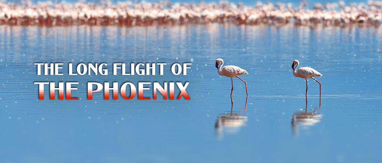 The Long Flight of the Phoenix