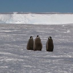 ANTARCTICA - TALES FROM THE END OF THE WORLD