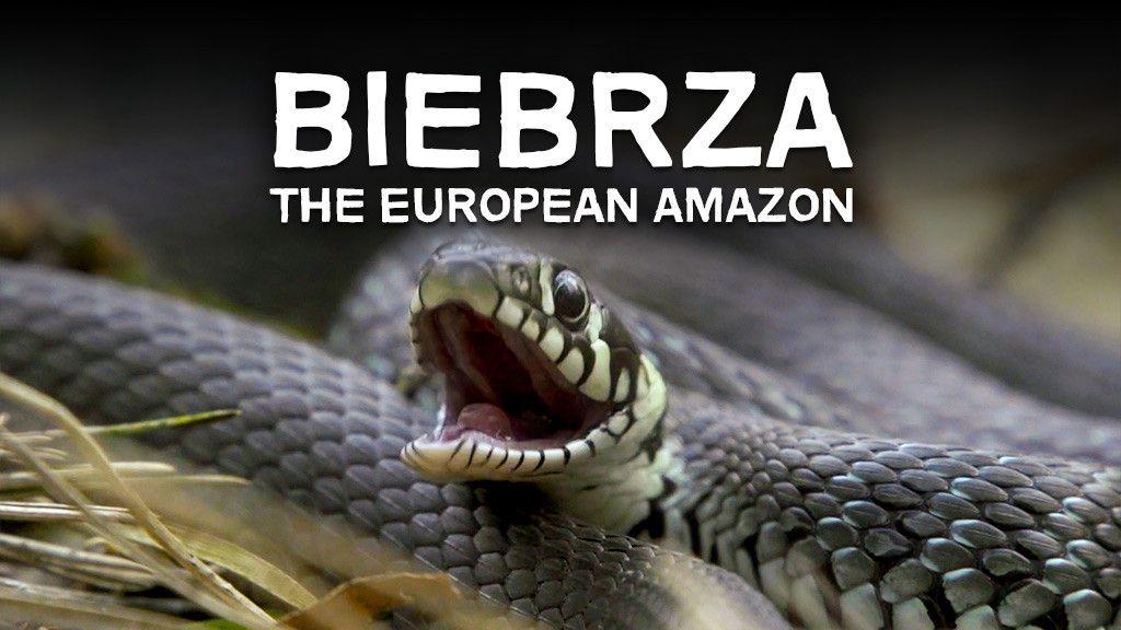 Biebrza: The European Amazon