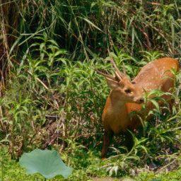 Shuklaphanta, The Other Wild Nepal