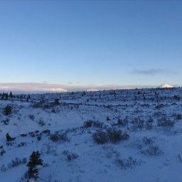 Iditarod: The Race Of A Lifetime